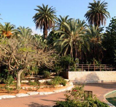 עצים בגן המושבה
